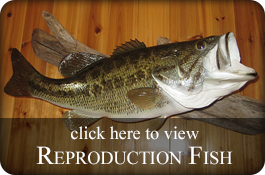 Reproduction Fish